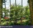 Botanischer Garten Jena Neu T3 Plants Stock S & T3 Plants Stock Alamy