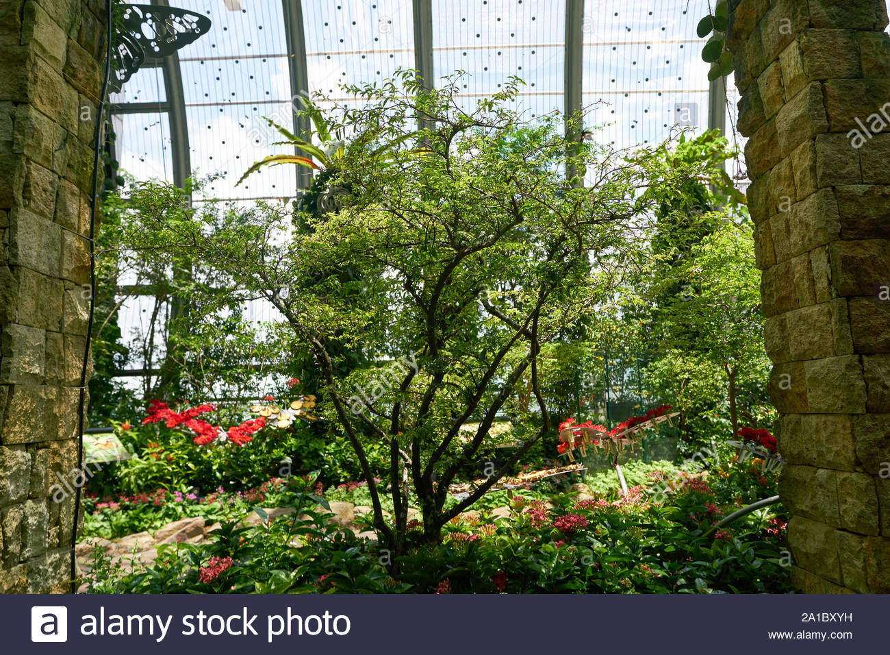 singapore circa april 2019 interior shot of butterfly garden in changi international airport 2A1BXYH