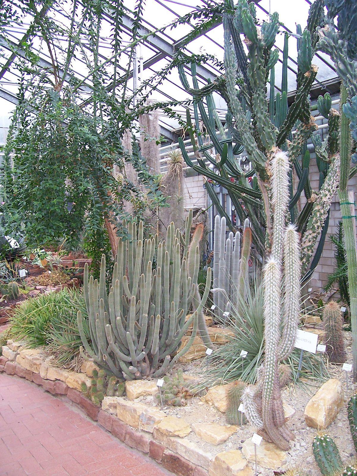 Botanischer Garten Marburg Inspirierend Plik Neuer Botanischer Garten Marburg Sukkulentenhaus 001