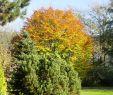 Botanischer Garten Marburg Schön Alter Botanischer Garten Marburg V Marburg Advisor Travel