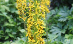 48 Elegant Botanischer Garten Marburg