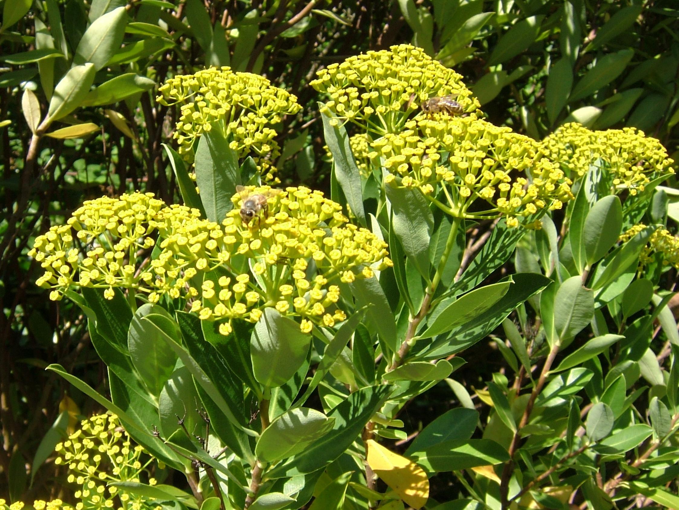 Botanischer Garten Meran Luxus File 2008 07 Botanical Garden Meran R0209