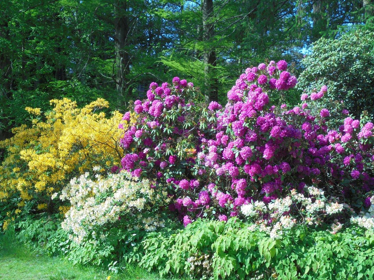 Botanischer Garten Rostock Best Of Botanischer Garten Rostock Nemačka Komentari