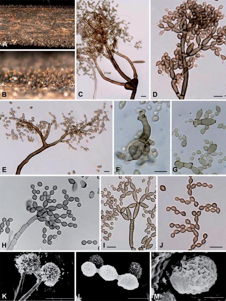 Botanischer Garten Rostock Inspirierend Cladosporium Leaf Blotch and Stem Rot Of Paeonia Spp Caused