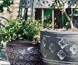 China Garten Frisch 29 Inspirierend China Garten Elegant