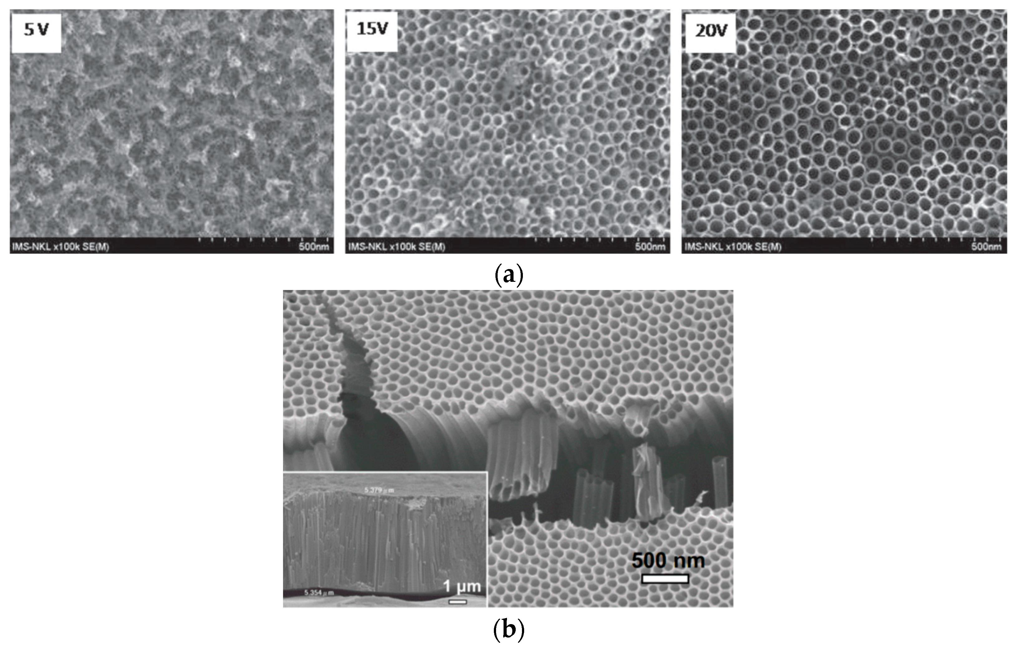 nanomaterials 10 g013