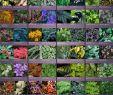 Englische Garten München Inspirierend 103 Best Shade Gardens Images