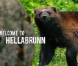Englische Garten München Luxus Tierpark Hellabrunn Munich Zoo Hellabrunn