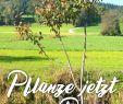 Englischer Garten Anlegen Elegant Baum Popular Pinterest