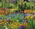Englischer Garten Anlegen Frisch 65 Fresh Beautiful Spring Garden Landscaping for Front Yard