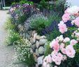 Englischer Garten Anlegen Frisch Bild Könnte Enthalten Pflanze Blume Baum Im Freien Und