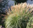 Englischer Garten Anlegen Inspirierend Pflegeleichten Garten Mit üppigen Beeten Anlegen