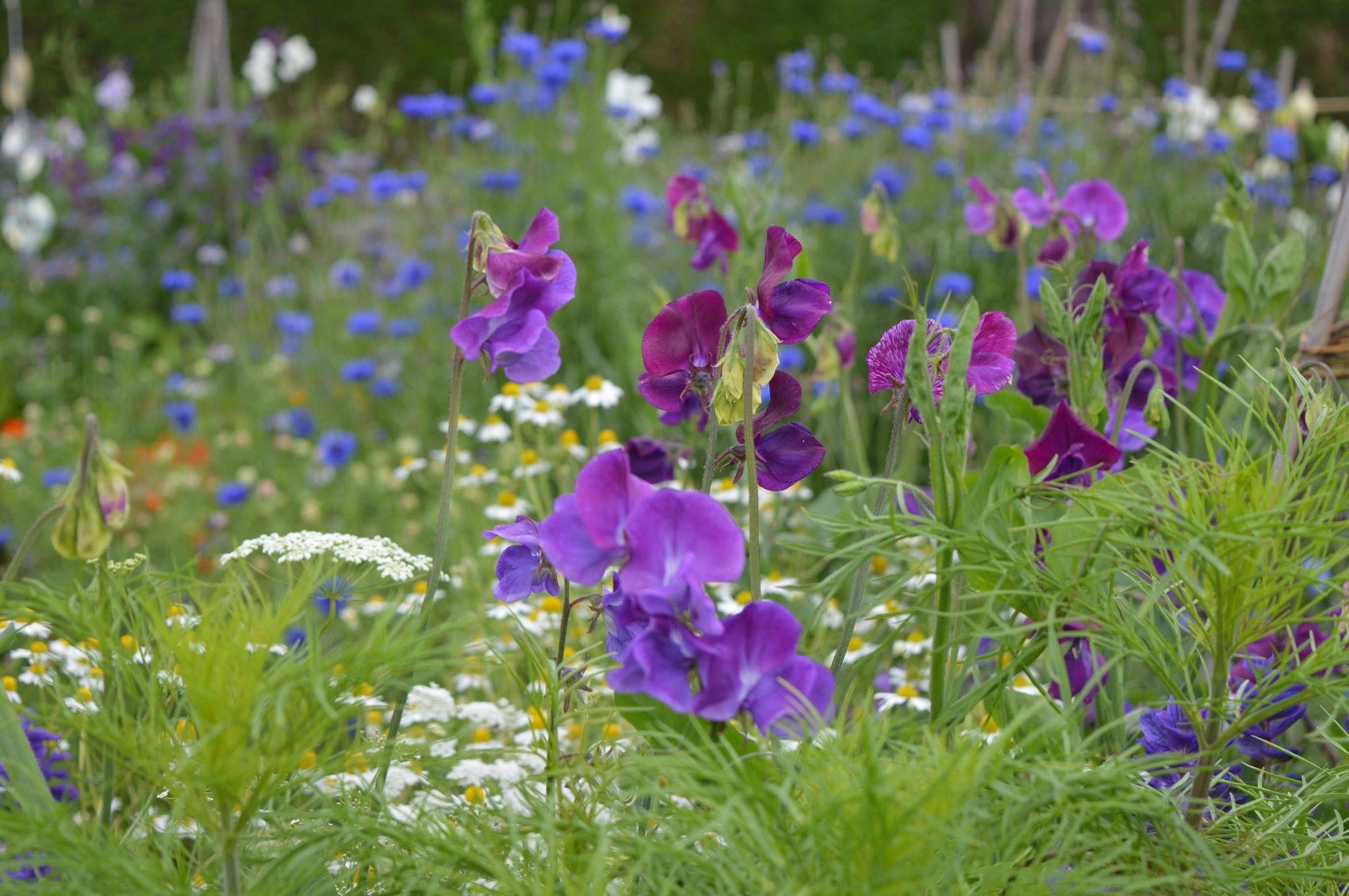 Englischer Garten München Inspirierend 400 Best English Garden Images