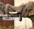 Englischer Garten München Parken Elegant Tierpark Hellabrunn Munich Zoo Hellabrunn