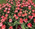 Englischer Garten Surfen Frisch Tulpengarten München Aktuelle 2020 Lohnt Es Sich Mit