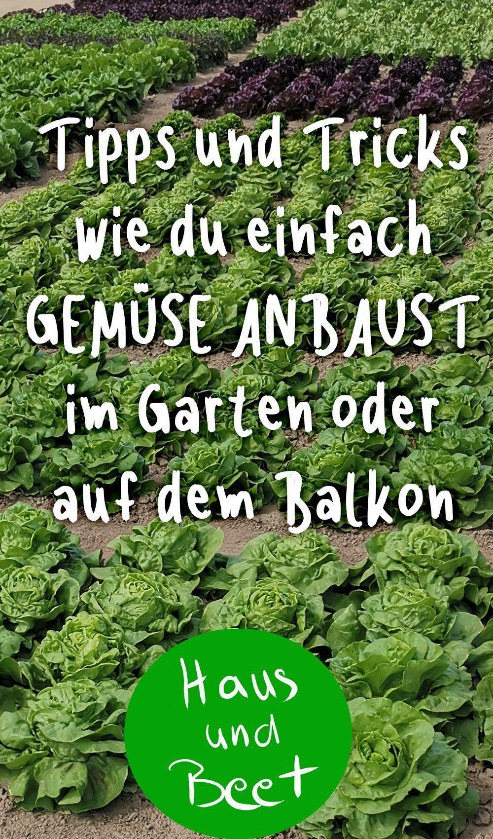 Garten Anlegen Neubau Schön Anbau Von Gemüse Haus Und Bett Gemüsegarten Pflanzen