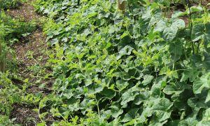 58 Frisch Garten Boden