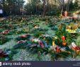 Garten Ebnen Frisch Urning Stock S & Urning Stock Alamy