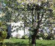 Garten Gestalten Mit Steinen Inspirierend Schone Garten Beautiful Schone Garten with Schone Garten