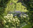 Garten Moorriem Frisch 1296 Best Garden Images In 2020