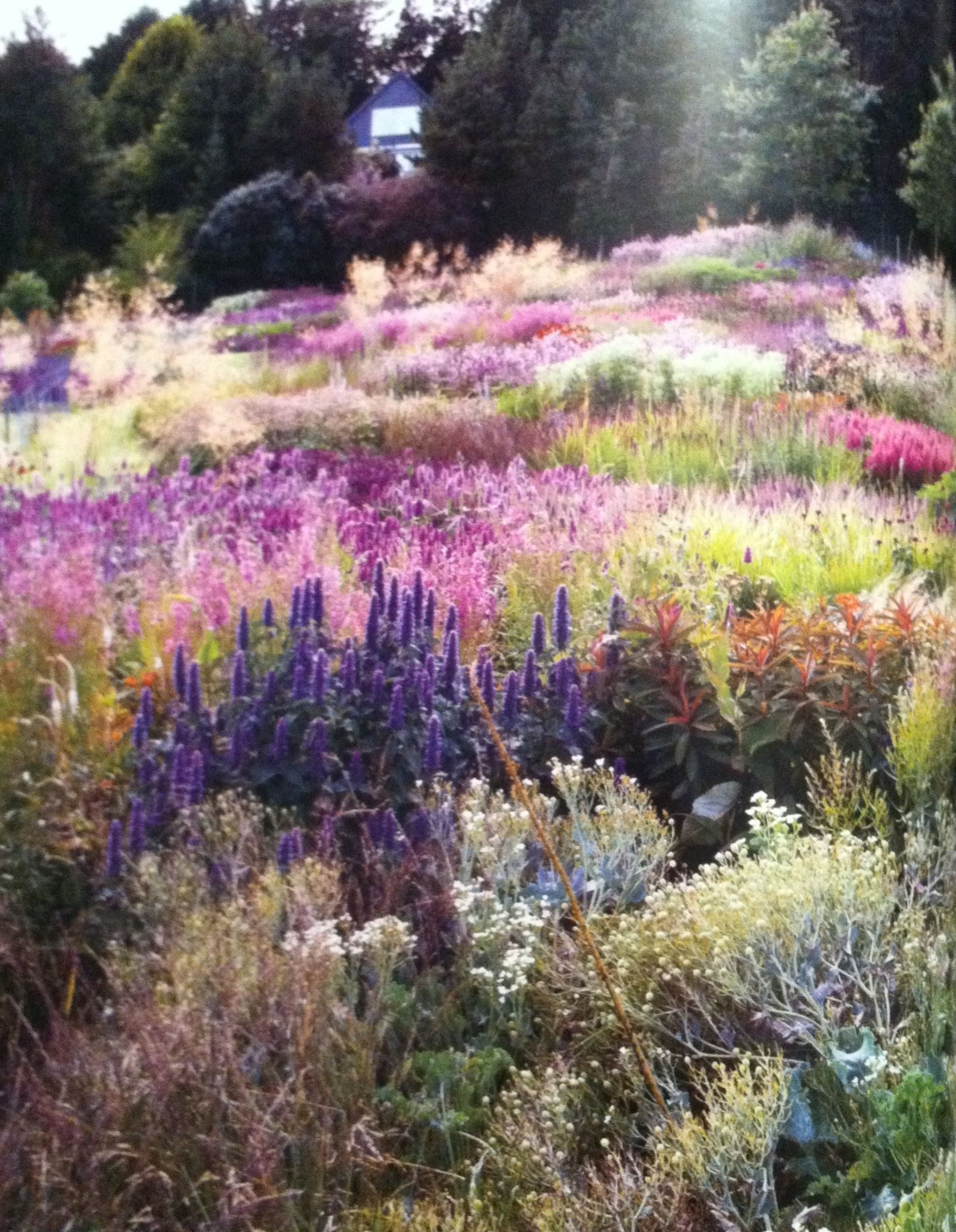 Garten Moorriem Inspirierend 23 Wildflower Garden for Your Backyard