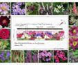 Garten Moorriem Inspirierend 292 Meilleures Images Du Tableau Idée Plate Bande En 2020