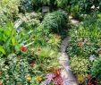 Garten Moorriem Schön 417 Best Gardens Images In 2020