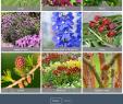 Garten Pavillons Neu Botanikfoto Picture Library Petitors Revenue and