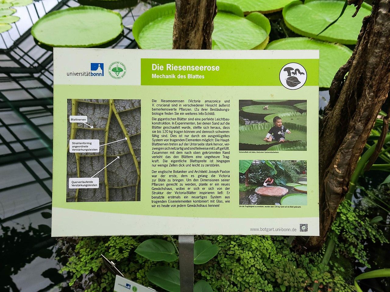 1280px 2018 06 18 bonn meckenheimer allee 169 botanischer garten victoriahaus 06