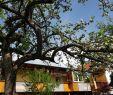 Garten Reihenhaus Inspirierend Vacation Home Haus Mira Bodensdorf Austria Booking