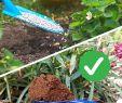Garten Salbei Schneiden Elegant Statt Kunstdünger Natürlich Düngen Mit Pflanzen Und