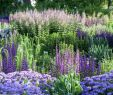 Garten Salbei Schneiden Frisch Die Schönsten Salbei Für Deinen Garten Stilvolles Design