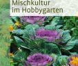 Garten Salbei Schneiden Neu Mischkultur Im Hobbygarten