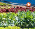 Garten Salbei Schneiden Schön Gärtnern Ohne Chemie Dank Mischkultur