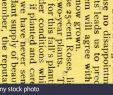 Garten Vögel Elegant B 2 A F R 36 Stock S & B 2 A F R 36 Stock Alamy