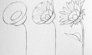 62 Einzigartig Garten Zeichnung