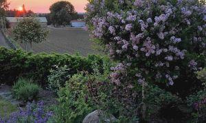 22 Genial Gartenflora Abo