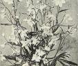 Gartenflora Abo Schön Convallaria Rosea Stock S & Convallaria Rosea Stock