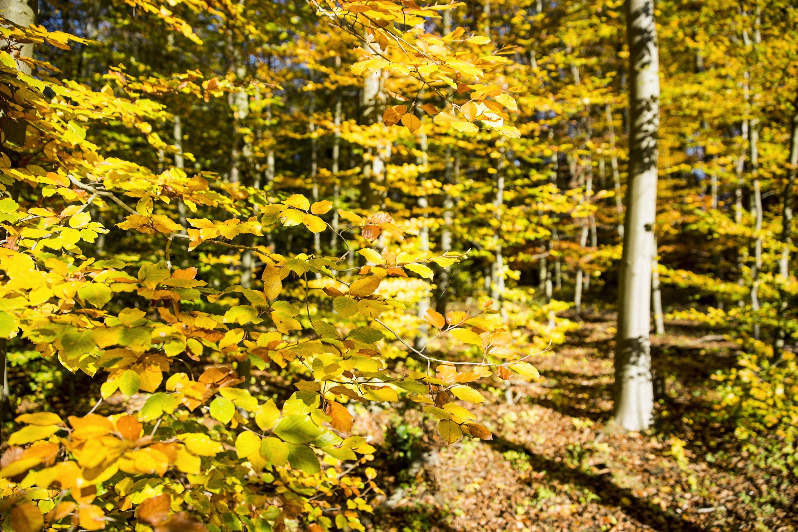 CEWE Fototipps Herbst 1 Fotovermerk CEWE