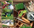 Gartenideen Kleine Gärten Gestalten Schön Baywa Kw11 by Russmedia Digital Gmbh issuu