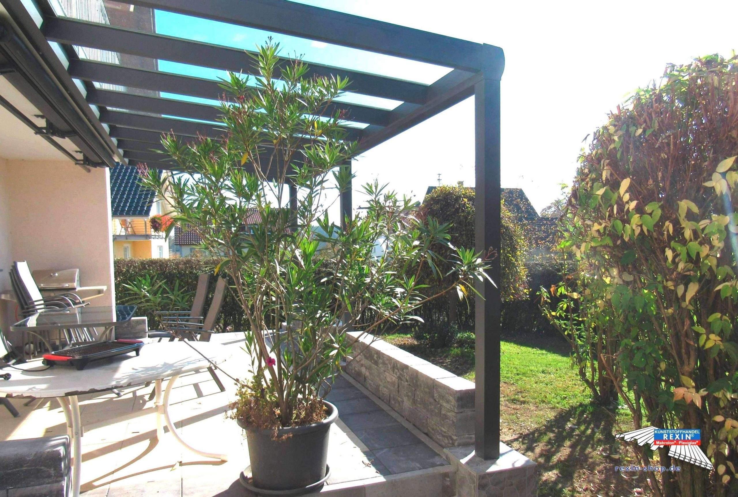 garten sichtschutz pflanzen inspirierend 30 reizend wohnzimmer pflanze schon of garten sichtschutz pflanzen