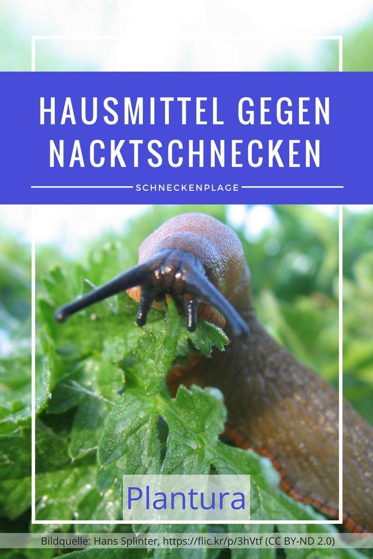 Giftige Pilze Im Garten Best Of Nacktschnecken Im Garten Bekämpfen Und Vertreiben