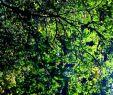 Giftige Pilze Im Garten Best Of Tree Wald Wood forrest Herbst Garten Draussenimgrünen