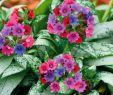 Giftige Pilze Im Garten Elegant Silver Bouquet