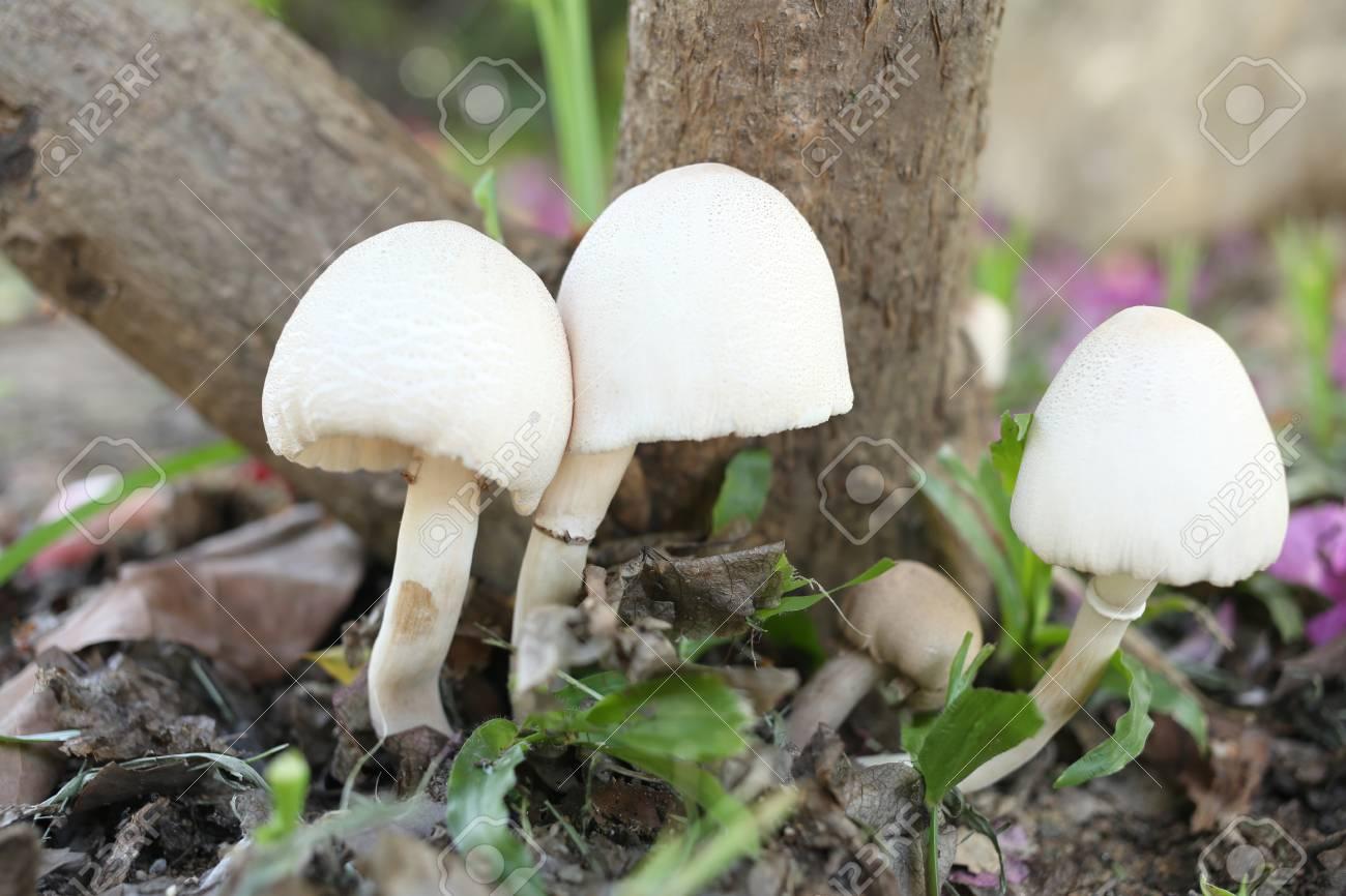 tige pilze unter den bäumen im garten wachsen