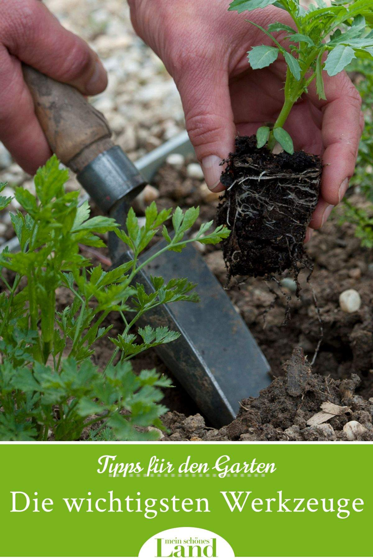 Giftige Pilze Im Garten Inspirierend Neu Pinterest Deutsch Garten Beste