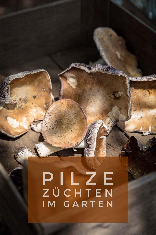 Giftige Pilze Im Garten Inspirierend Pilze Selber Anbauen – so Geht S Garten