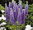 Giftige Pilze Im Garten Luxus Edel Ritters Blau