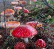 Giftige Pilze Im Garten Neu Pin Von astrid Artinian Auf Fliegenpilz