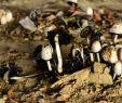 Giftige Pilze Im Garten Neu Stock